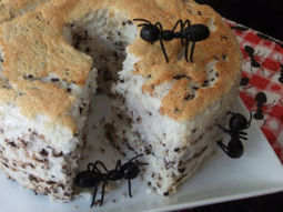How to Effectively Deal With Ants at Home - Journals - CafeMom | Cleaning and Home Hygiene | Scoop.it