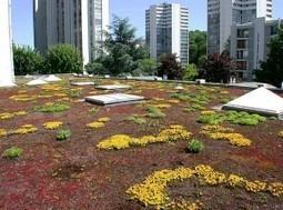 Des toitures végétalisées pour mieux isoler | Toit végétalisés et agriculture | Scoop.it