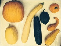 Italian horticultural and culinary records of summer squash (Cucurbita pepo, Cucurbitaceae) and emergence of the zucchini in 19th-century Milan | plant cell genetics | Scoop.it