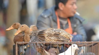 Deadly bird flu cases surging | Virology News | Scoop.it