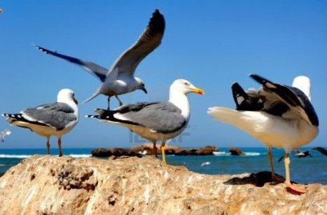 Transfert Essaouira | Location voiture Essaouira | Scoop.it