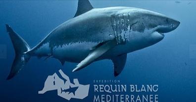 Expédition Requins Blancs de Méditerranée / Actus et Photos / Musée océanographique de Monaco / Channels - MC Channel - Video channels of Monaco | Requins | Scoop.it