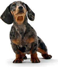 Gourmet dog treats | Information on Cat Litter | Scoop.it