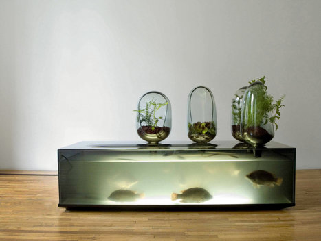 Bio Design in the Home: The Beauty of Bacteria   @liminno   Scoop.it