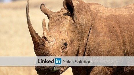 How to Convert the Rhinos on Your Team into Social Selling Superstars | Social Selling:  with a focus on building business relationships online | Scoop.it