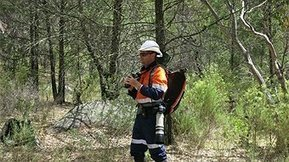 How wearing a hard-hat can threaten wildlife - ABC Local   Accidents Forensics - OHS   Scoop.it