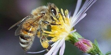 [pétition] Urgence pour les abeilles - Il reste 24h ! | Toxique, soyons vigilant ! | Scoop.it