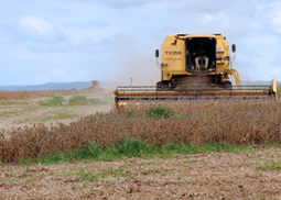World Bank Supports Global Agriculture as Food Prices Spike | Food Security | Scoop.it