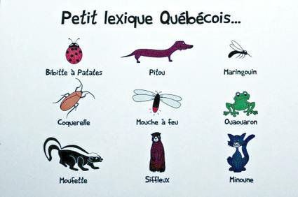 27 mots en français québécois | Remue-méninges FLE | Scoop.it