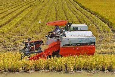 Vietnam: Rice areas to cultivate other crops - maize and soybeans | MAIZE | Scoop.it