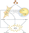 Immunology and Cell Biology - Viruses /`chew the fat/'![quest]   Science & Knowledge   Scoop.it