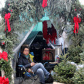 The curious life of urban Christmas tree sellers | Christmas Trees and More | Scoop.it