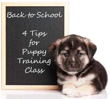 4 Tips for Puppy School Success | Pet Health Tips | Scoop.it