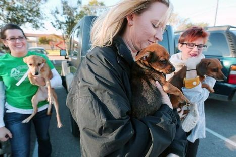 Seniors' pets treated to free health care day | RX News | Articles for Bach RX Twitter Feed | Scoop.it