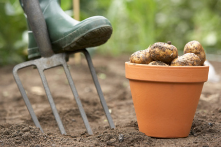 Yard and Garden: Get the Most from Your Home Potato Growing Experience | Vegetable Gardening Resources | Scoop.it