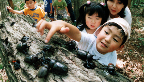 A Fondness for Insects in Japanese Culture | Past Articles | Hiragana Times | Year 3 Science: Living things in Japan | Scoop.it