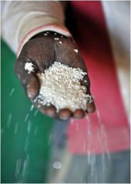 Researchers Sequence the Entire Genome of African Rice to Beat Global Hunger | Medindia | CALS in the News | Scoop.it