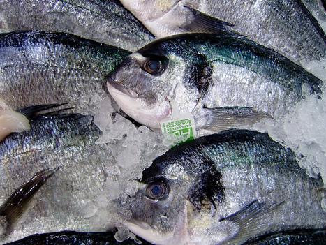 L'accord sur les quotas de pêche européens déçoit - zegreenweb | Chronique d'un pays où il ne se passe rien... ou presque ! | Scoop.it