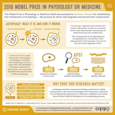 The Nobel Prizes in Science 2016   SACE and IB Chemistry at PAC   Scoop.it