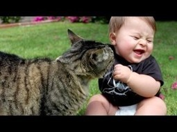 Baby React To Funny Cats - Funny Kids Videos | Education | Scoop.it