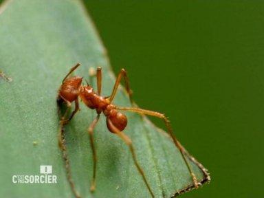 Le génie des fourmis - France 3 | CNRS Guyane | Scoop.it