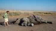 #ShockWildlifeTruths: Poachers kill 26 elephants in Chobe National Park | Pachyderm Magazine | Scoop.it