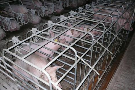 90% des Français sont opposés à l'élevage intensif présent à 80% en France | Des 4 coins du monde | Scoop.it