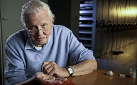 Sir David Attenborough: If we do not control population, the natural world will - Telegraph.co.uk | Going global | Scoop.it