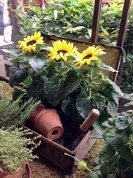 Cottage Kitchen Garden at the French Brasserie   Corporate Flowers London   Scoop.it
