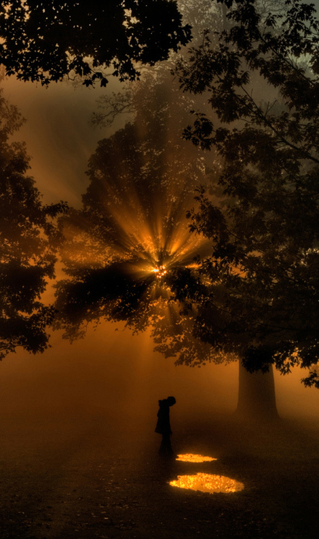 Sunrise through the Trees by Robert Jones | Photos history | Scoop.it