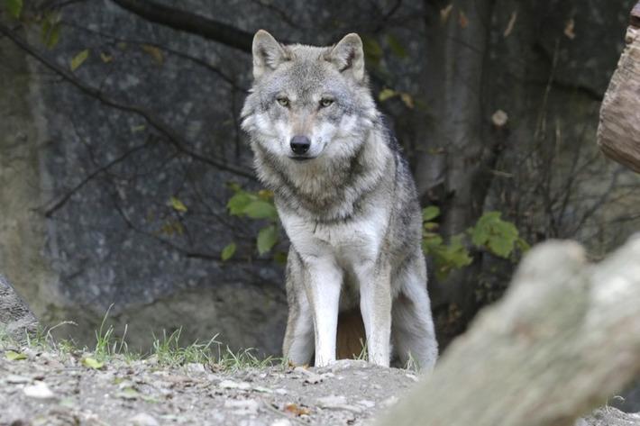 """Hoax : non, les loups ne menacent pas le site du crash de l'A320   Alertes et Conseils Sécurité """"AutreMent""""   Scoop.it"""
