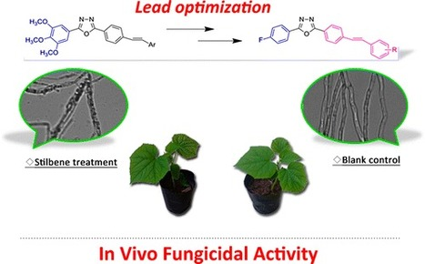 Synthesis and Biological Evaluation of Novel Fluorine-Containing Stilbene Derivatives as Fungicidal Agents against Phytopathogenic Fungi - | Colletotrichum | Scoop.it