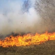 Incendios forestales | ciencias sociales 1G | Scoop.it