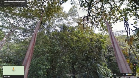 Google Street View Now Lets You Explore The Amazon Jungle ViaZip-Line | Spatial Education and technology | Scoop.it