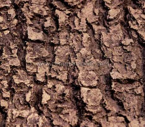 Artificial Ash Tree Bark is available for wholesale purchase | Artificial, Silk Trees Knowledge Center | Scoop.it