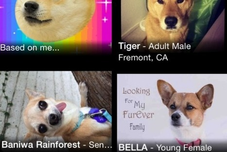 PetMatch Searches For Adoptable Pets That Look Just Like Your Old Ones - PSFK | Innovation and alternative strategy nuggets | Scoop.it