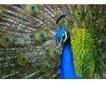 Gli e-reader del futuro con schermi che imitano i pavoni - Tom's Hardware Guide (Comunicati Stampa) (Blog) | Io scrivo, leggo, bloggo, racconto, recensisco | Scoop.it