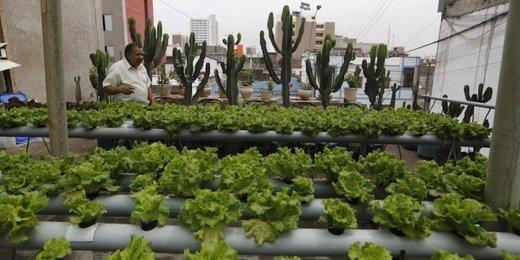 Agriculture urbaine, le défi de la Terre