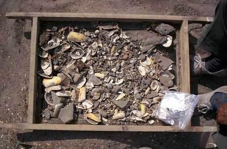 Antiguas conchas marinas reescriben 10.000 años de historia de los ciclos de El Niño | historian: science and earth | Scoop.it