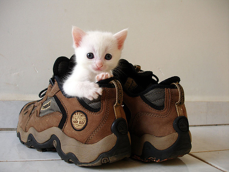 SeekPets - Pet Supplies Online | Pets - Buy Pets Online | Scoop.it