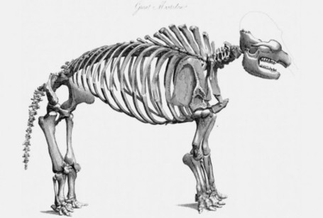 Study Finds Humans, Mastodons, Mammoths Co-Existed In North America | A Sense of the Ridiculous | Scoop.it