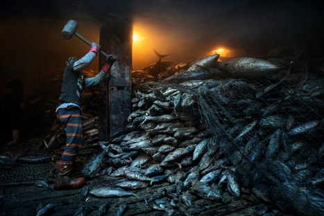 One of the World's Biggest Fisheries Is on The Verge of Collapse | Aquaculture Directory | Scoop.it