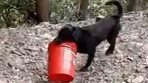 Ce labrador est incroyable. Il pourrait bien être le chien plus heureux du monde | CaniCatNews-actualité | Scoop.it