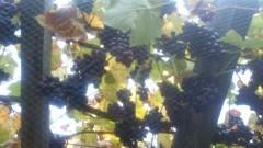 LLN - Le vin de façade 2013 | obésité | Scoop.it
