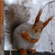 Animals in Winter We Domesticate | Pedegru | Animals Make Life Better | Scoop.it