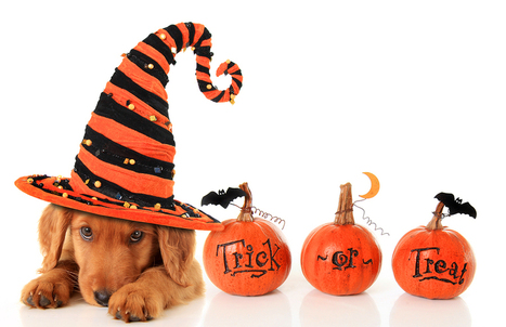 7 Tricks And Treats For Your Job Search | LIS Career Information Resource | Scoop.it