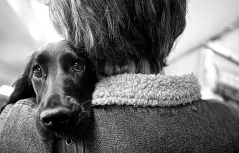 Could Man's Best Friend Be Man's Best Medicine? | Before It's News | CALS in the News | Scoop.it
