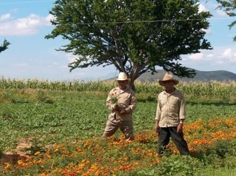 México / Los transgénicos son la nueva colonización de las semillas | MOVUS | Scoop.it