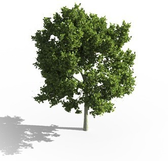 Laubwerk – 3D Plants for CG Artists – 3D Tree Models | For our Students | Scoop.it