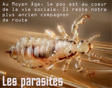Poux, tiques, punaises de lit, acariens... un véritable problème de santé publique / France Inter   EntomoScience   Scoop.it